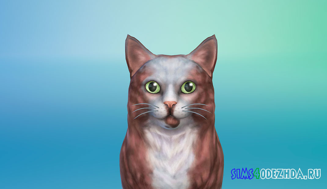 Кот Ino для Симс 4 – фото 1