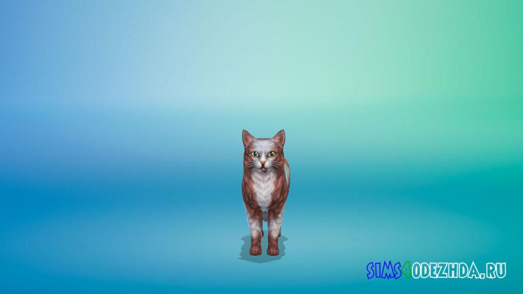 Кот Ino для Симс 4 – фото 2