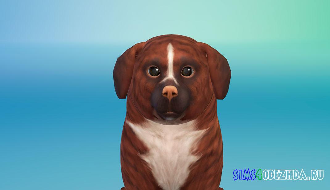 Собачка Корица для Симс 4 – фото 1