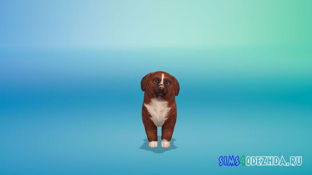 Собачка Корица для Симс 4 – фото 2