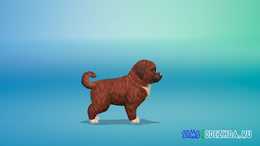 Собачка Корица для Симс 4 – фото 3