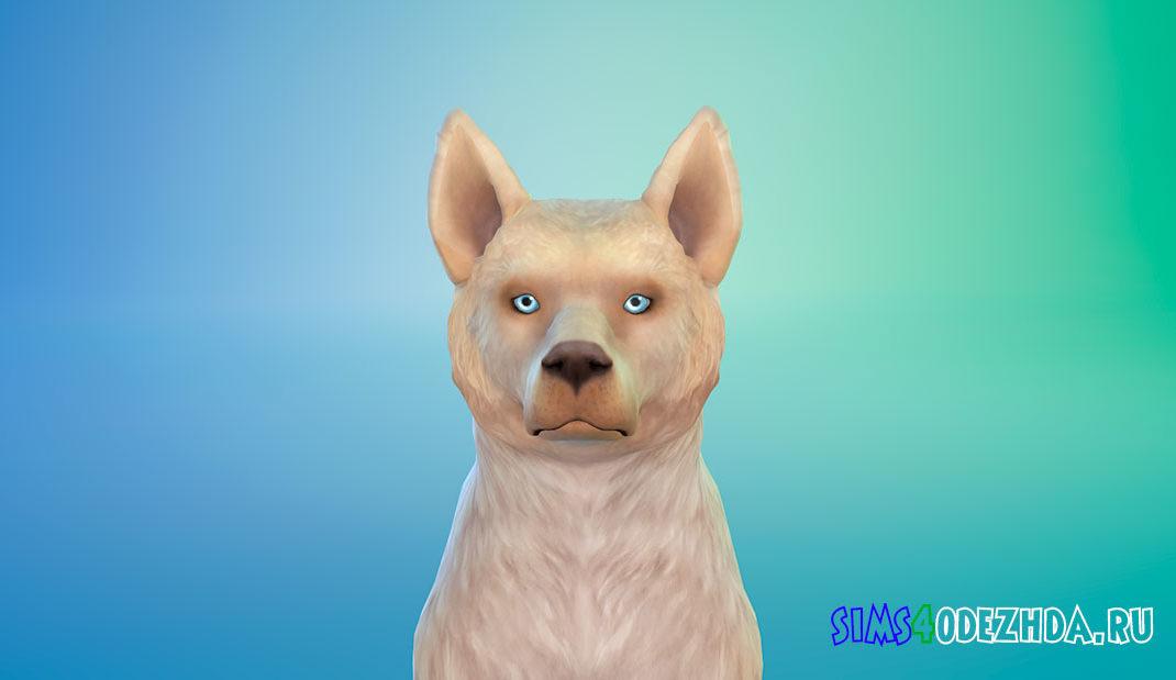 Собака Talulah для Симс 4 – фото 1