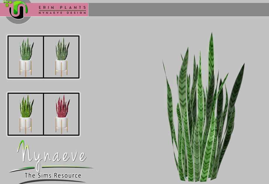 Комнатное растение Sansevieria для Симс 4 – фото